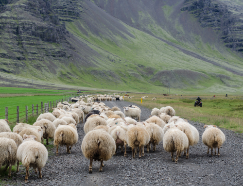 So authentic! 11 things to try in Iceland