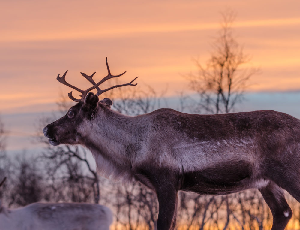 10 Winter Musts of Finland