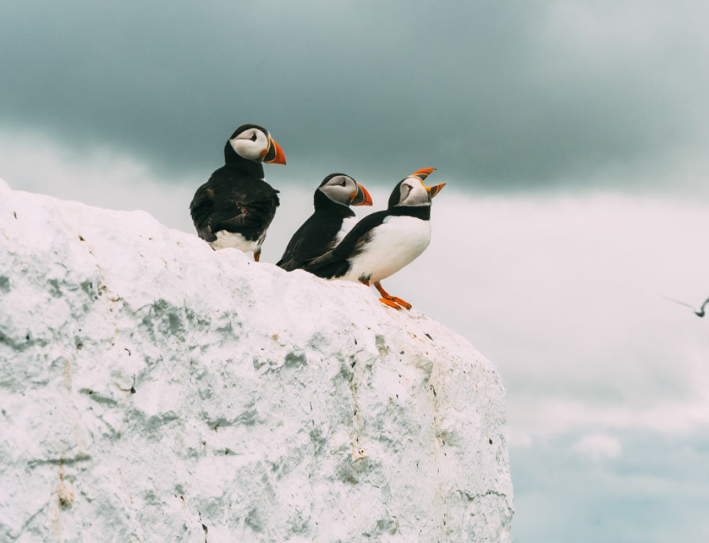 Farne Islands: the Most Beautiful Scenery of England
